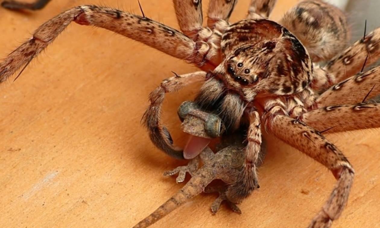 Τρόμος: Αχόρταγες αράχνες καταναλώνουν κάθε χρόνο έως και 800 εκατομμύρια τόνους...