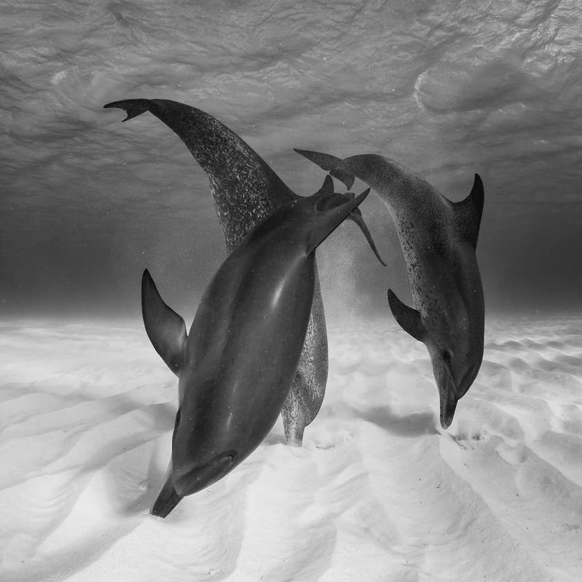 Οι φωτογραφίες των βραβείων Sony World Photography είναι ό,τι πιο εντυπωσιακό θα δείτε σήμερα