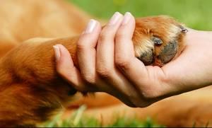 Παράδειγμα πρός μίμηση ο Δήμος Μυκόνου: 73.800 ευρώ για την περίθαλψη σε αδέσποτα ζώα