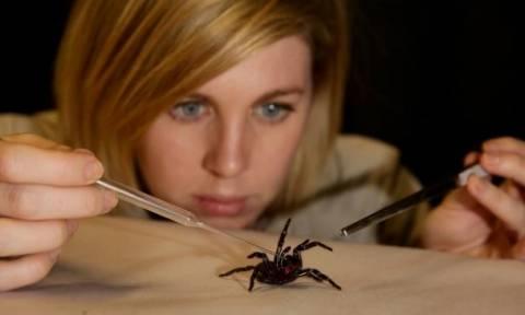 Το δηλητήριο αυτής της θανατηφόρας αράχνης μπορεί να σώσει έξι εκατομμύρια ζωές σε ένα χρόνο