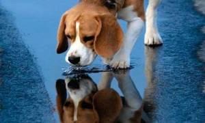 Ο αντιδήμαρχος του Μεσολογγίου κάνει έκκληση βοήθειας για εντοπισμό του δολοφόνου αδέσποτων ζώων