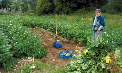 Δωρεάν μαθήματα βιολογικής γεωργίας σε ανέργους