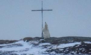 Οιωνός; Μυστήριο με πολική αρκούδα που «προσεύχεται» σε σταυρό (Pics)