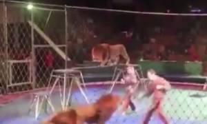 Σοκ σε τσίρκο: Λιοντάρια «κατασπαράζουν» τον εκπαιδευτή τους (video)