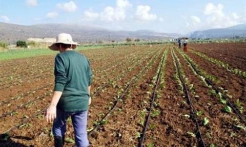 Λύση - πακέτο για τα χρέη των αγροτών: Οι προϋποθέσεις και τα κριτήρια