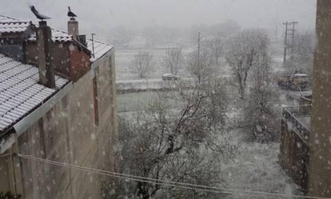 Καιρός: Χιονίζει στο Καρπενήσι! Δείτε το βίντεο που ανέβασε ο Κώστας Μπακογιάννης