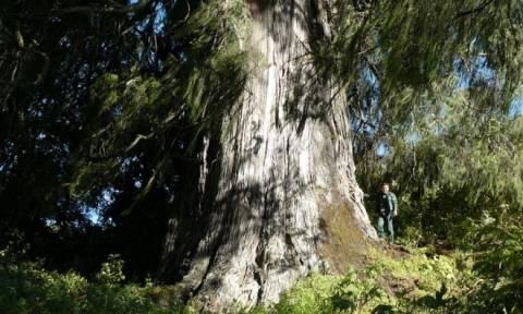 Ολοκληρώθηκε η καταμέτρηση: Δείτε με ένα κλικ όλα τα είδη δέντρων στον πλανήτη Γη