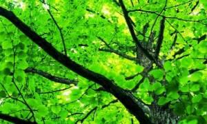 Πάνω από 60.000 είδη δένδρων στη Γη