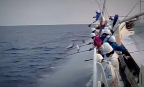 Ψάρεμα: Σίγουρα, δεν έχετε ξαναδεί κάτι τέτοιο... (Video)