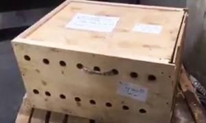 Κι όμως! Αυτό το κουτί έκρυβε ένα σοκαριστικό θέαμα! (pics)