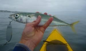 Η Μεσόγειος εκπέμπει… SOS - Εξαφανίζονται τα ψάρια και τα θηλαστικά της