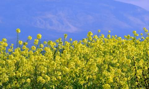 Απίστευτο! Η φωτοσύνθεση των φυτών έχει αυξηθεί κατά 30% μετά τη βιομηχανική επανάσταση