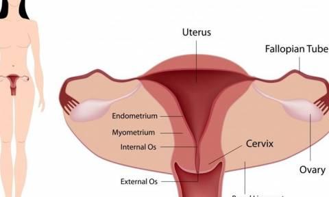 Επιστήμονες κατάφεραν να δημιουργήσουν γυναικείο ενδομήτριο στο εργαστήριο