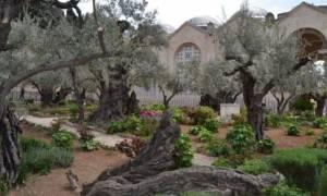 Ο κήπος της Γεσθημανής: Δείτε τον τόπο στον οποίο προσευχήθηκε για τελευταία φορά ο Χριστός