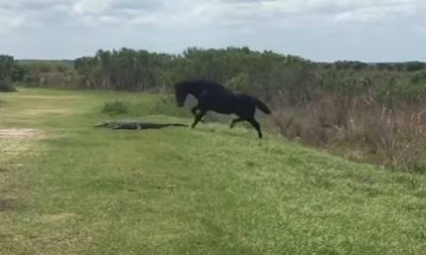 Η συγκλονιστική στιγμή που ένας αλιγάτορας δέχεται επίθεση από ένα άλογο! (vid)