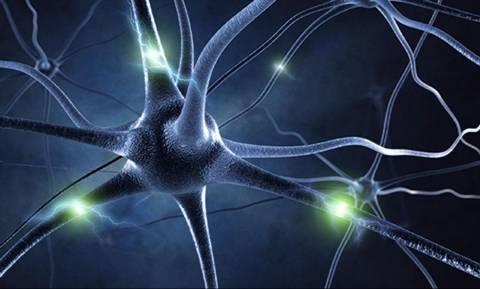 Νέα ανακάλυψη ανατρέπει όσα γνωρίζαμε για το πώς σχηματίζεται η μνήμη στον εγκέφαλο