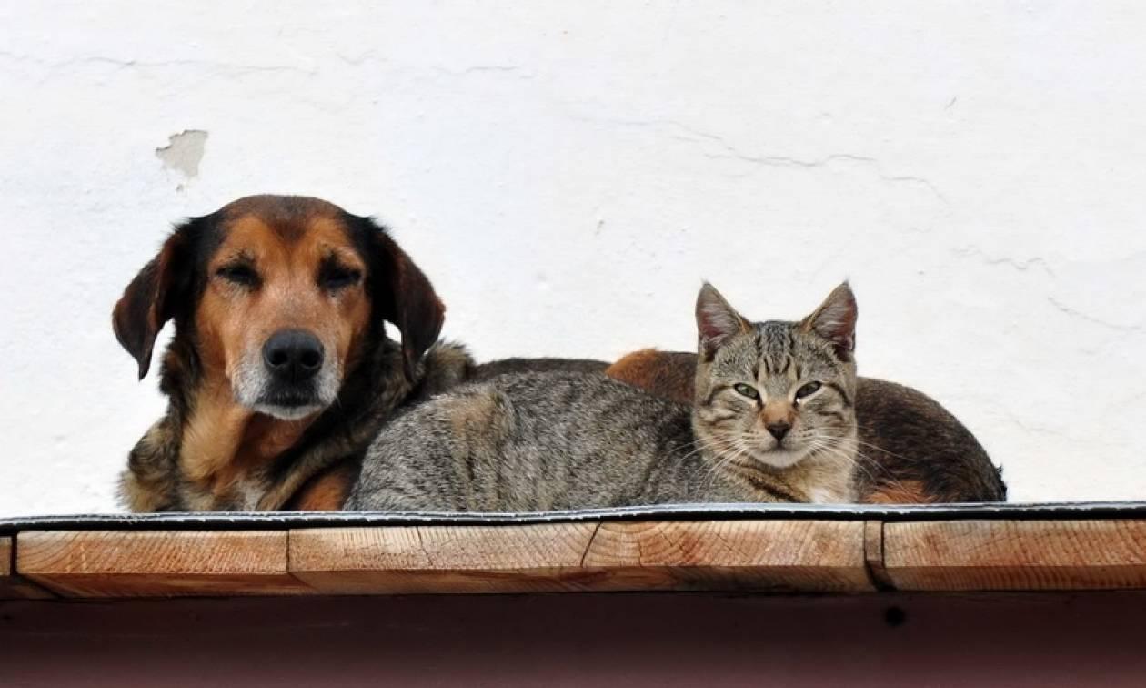 Στο αυτόφωρο όσοι βασανίζουν ή κακοποιούν ζώα