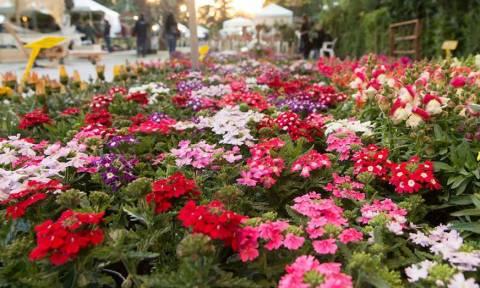Δήμος Κηφισιάς: Στις 27 Απριλίου η 63η Ανθοκομική Έκθεση Κηφισιάς