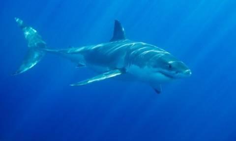 Απίστευτο: Της επιτέθηκε καρχαρίας και τον έδιωξε ο άνδρας της με... γροθιές!