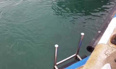 Tούνα... καταπίνει γλάρο και τον «φτύνει» ζωντανό (video)