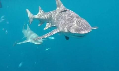 Τρόμος στο νερό για γνωστή πορνοστάρ: Της επιτέθηκε καρχαρίας (pics+vid)