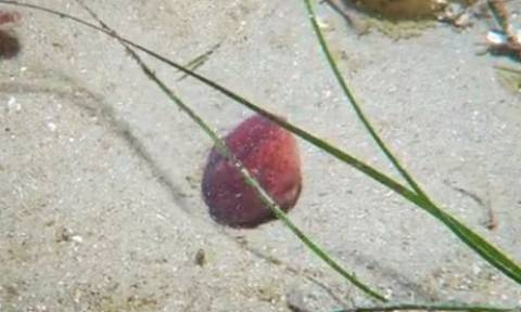 Δεν υπάρχει περίπτωση να μαντέψετε τι είναι αυτό το κόκκινο στη μέση της φωτογραφίας (video)