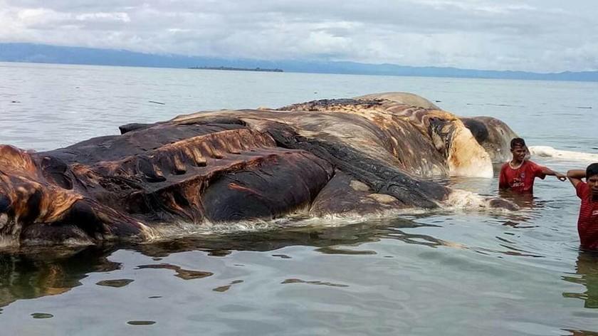 Μυστήριο με το τεράστιο κουφάρι «τέρατος» που ξέβρασε η θάλασσα (Pics+Vid)