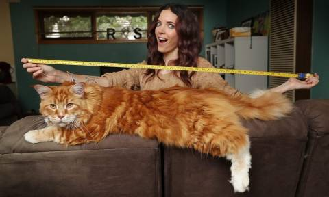 Έκπληκτο ζευγάρι αγόρασε ένα μικρό γατάκι το οποίο εξελίχθηκε στη μεγαλύτερη γάτα του κόσμου (Pics)