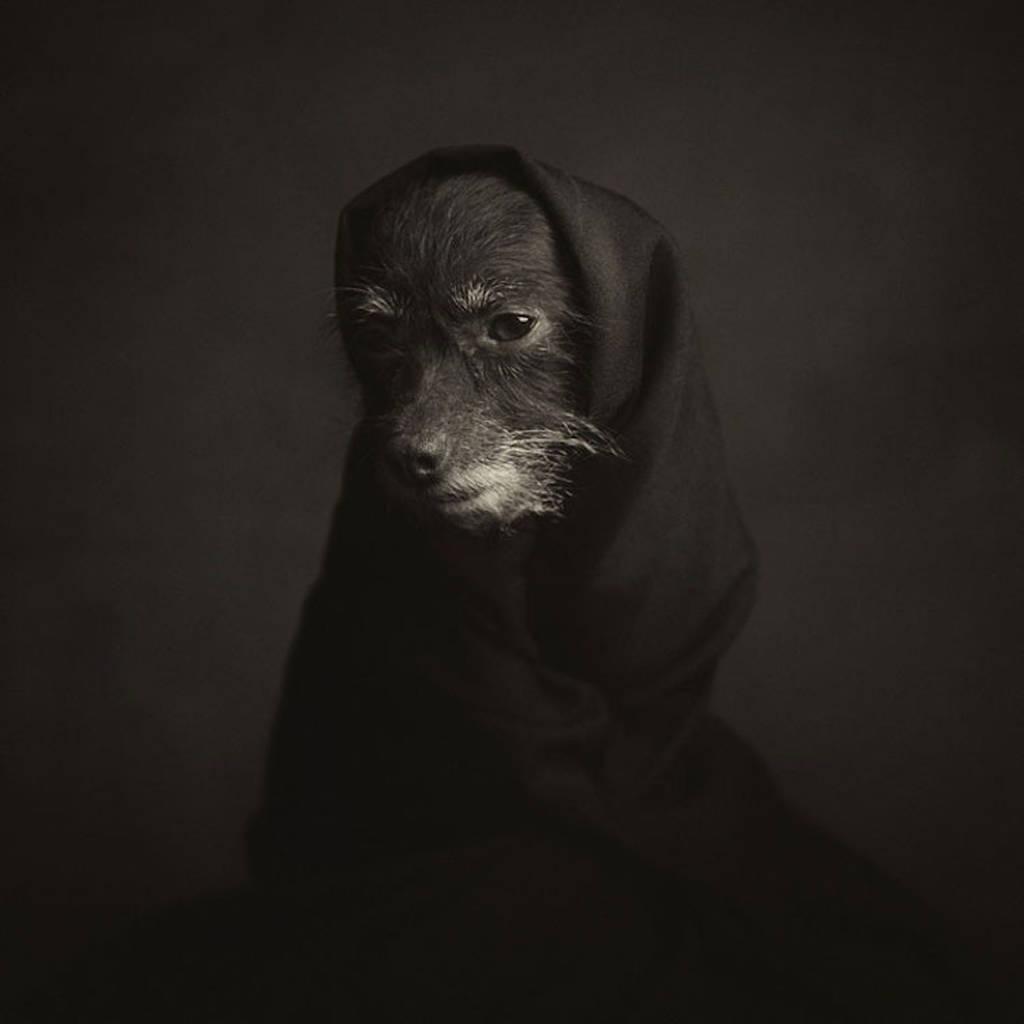Έντεκα φωτογράφοι που μετέτρεψαν τις φωτογραφίες κατοικίδιων ζώων σε μορφή τέχνης