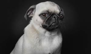 Viral: Έντεκα φωτογράφοι που μετέτρεψαν τις φωτογραφίες κατοικιδίων ζώων σε μορφή τέχνης