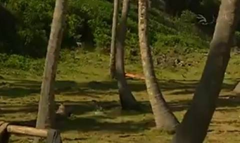 Survivor: Γυμνός στον Αγιο Δομίνικο ο Γιάννης Σπαλιάρας (Photo+Video)