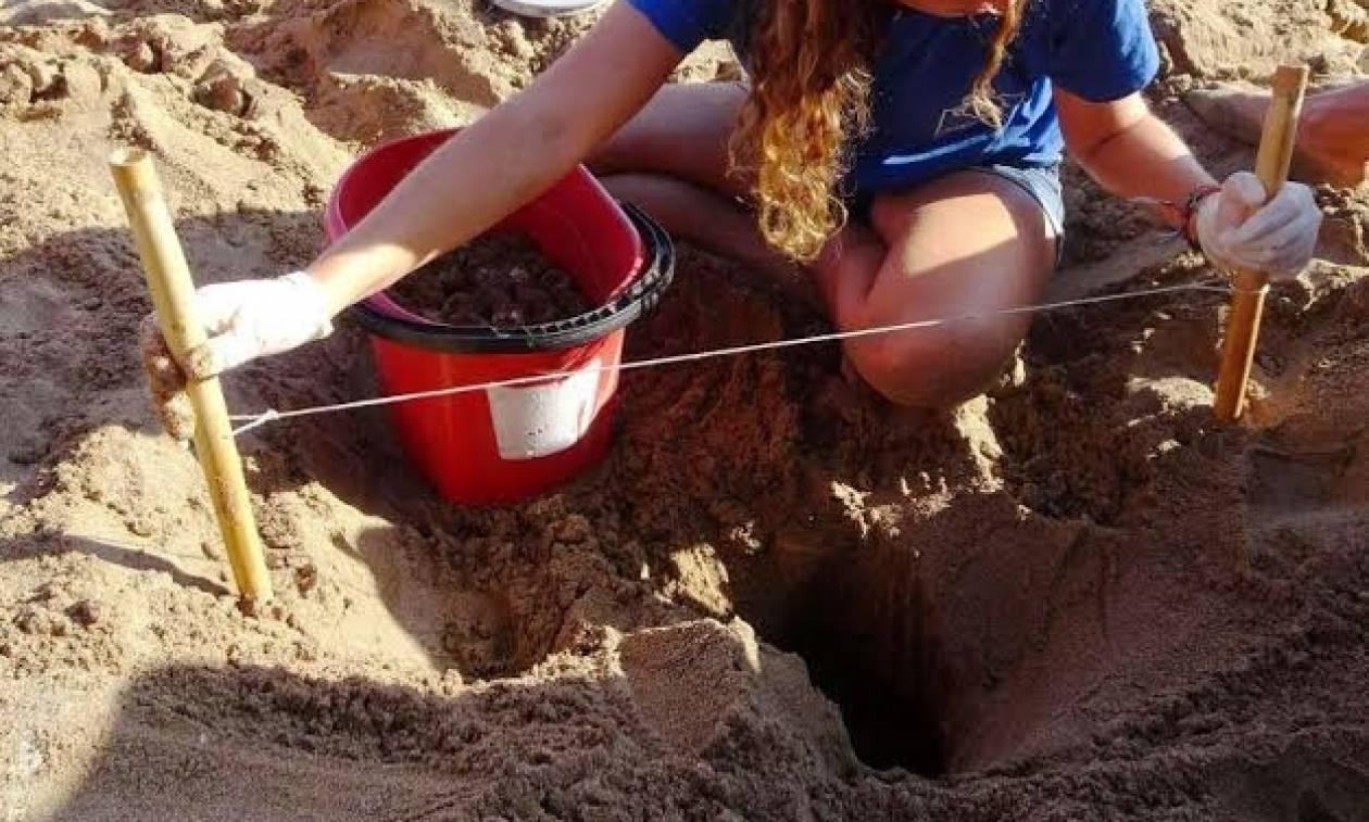 Βρέθηκε η πρώτη φωλιά της χελώνας καρέτα - καρέτα στην Κρήτη