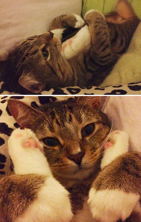 Viral: Όταν οι γάτες φέρονται σαν πλάσματα από άλλο κόσμο (Pics)
