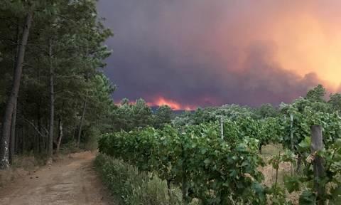 На трассе в Португалии 16 человек сгорели в своих автомобилях из-за лесного пожара