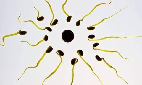 H ηλιοφάνεια και η χαλάρωση του καλοκαιριού αυξάνουν τη γονιμότητα σε άνδρες και γυναίκες