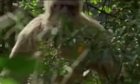 Εβαλε κρυφή κάμερα στον σκύλο του! Αυτό που είδε λίγο αργότερα τον τρόμαξε τρελά (video)