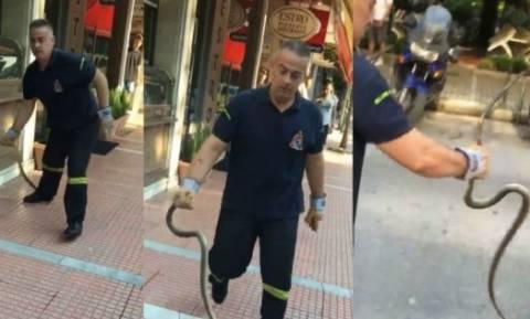 Λάρισα: Γιατί γέμισε φίδια η πόλη; - Τι απαντούν οι αρμόδιοι