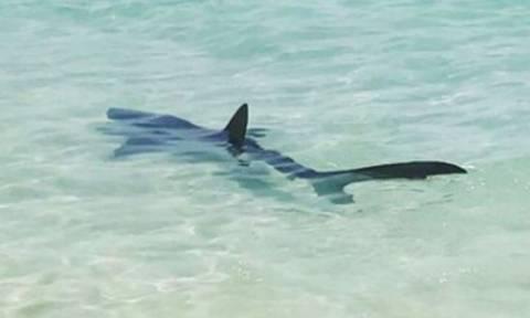 Τρόμος σε πασίγνωστη παραλία: Καρχαρίας 2,5 μέτρων βγήκε στην ακτή