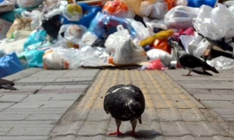 Θεσσαλονίκη: Με προσωπικό ασφαλείας η αποκομιδή των σκουπιδιών
