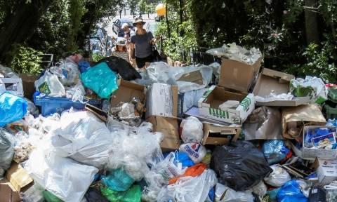 Καύσωνας και δυσωδία: Σκουπίδια, τρωκτικά και ζέστη απειλούν την υγεία μας