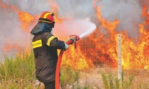 Φωτιά σε εξέλιξη στο Κρυονέρι Αττικής