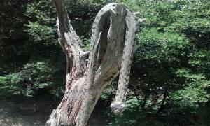 Τρόμος στα Άγραφα: Ήρθαν αντιμέτωποι με ένα φίδι 2,5 μέτρων!
