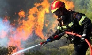 Φωτιά ΤΩΡΑ: Μεγάλη πυρκαγιά στη Λακωνία