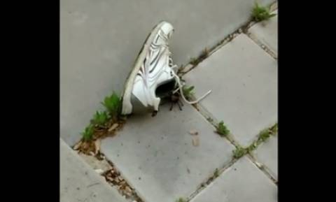 Πήγε να φορέσει το παπούτσι της και έπαθε σοκ... Το πέταξε στο δρόμο (video)