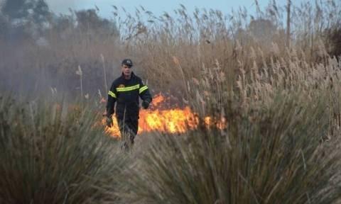 Αναζωπυρώθηκε η φωτιά στη Λακωνία: Οι φλόγες «έζωσαν» τον Κότρωνα