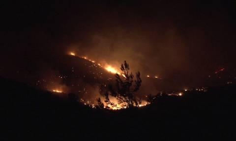 Φωτιά σε δασική έκταση στο Μαραθώνα