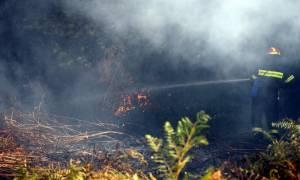 Αχαΐα: Σε ύφεση η φωτιά στην περιοχή Μαγούλα του Κάτω Καστριτσίου