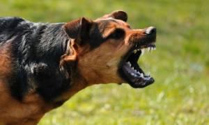 Ηλεία: Στο νοσοκομείο 62χρονος έπειτα από επίθεση σκύλου