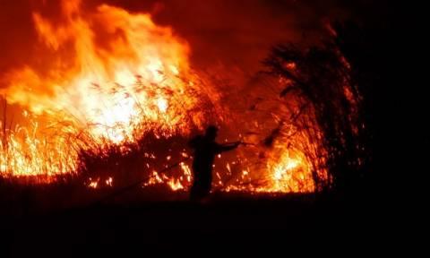 Ροδόπη: Πύρινη λαίλαπα σαρώνει δασική έκταση στη Νέα Σάντα - Ολονύχτια η μάχη με τις φλόγες
