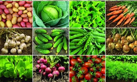 Έρευνα-σοκ: Καταναλώνουμε αγροτικά προϊόντα που ποτίζονται με βοθρολύματα